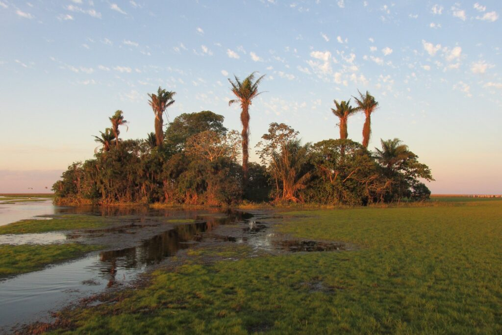 an island of palm trees in a flooded plain