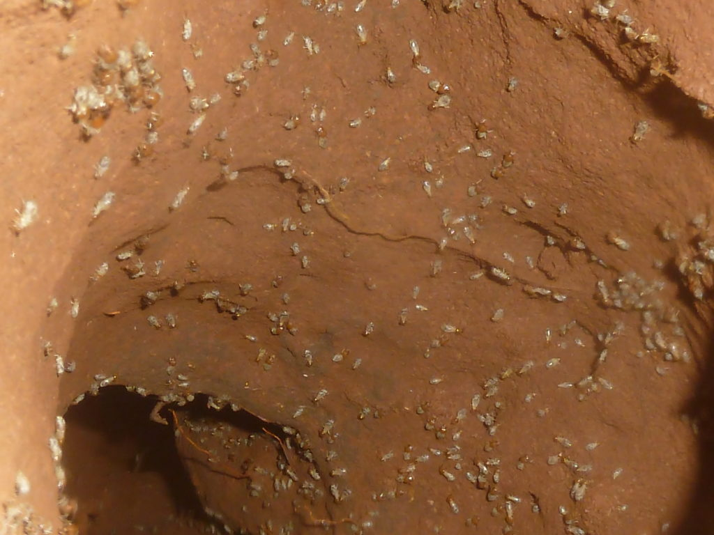 termites dotting the solid walls of a termite tunnel