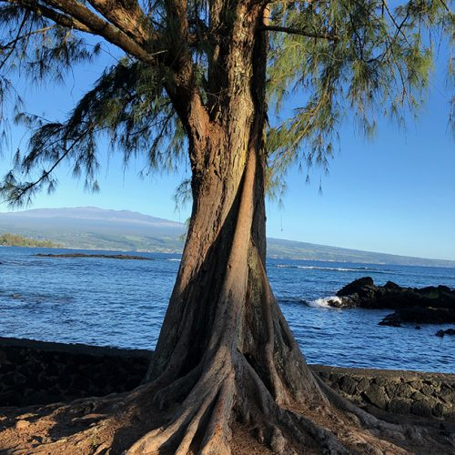 angular tree trunk with needle-like leaves